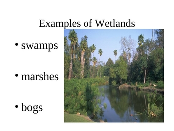 Wetlands Powerpoint Presentation