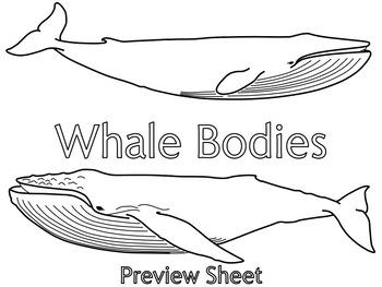 Whale Bodies : Diagram Activity
