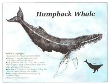 Whale Cards!