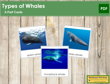 Whale Cards: 3-Part Cards