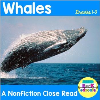 Whale Close Read