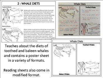Whale Diets : Poster Activity