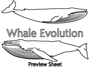Whale Evolution - Timeline Activity