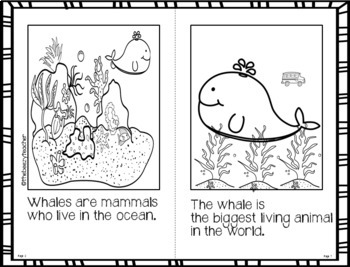 Whale Fact Booklet