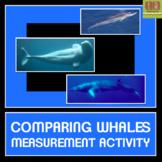 Whale Measurement Activity
