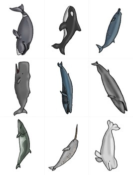 Whales - Colored and Blackline illustrations for Games, Math, Science, Books