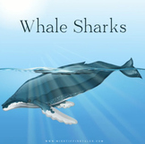 Information Texts, Whale Sharks, KS1