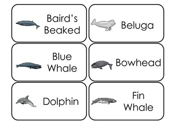 Whale Types Picture Word Flash Cards. Preschool flash cards for children.