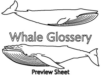 Whale Vocabulary Booklet Activity