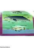 Whale and Fish sort