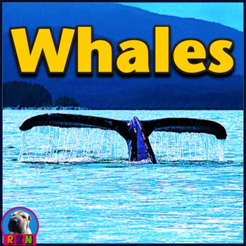 Whales - PowerPoint & Activities