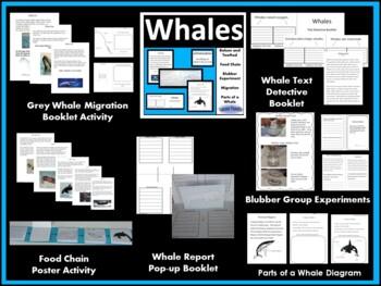 Whales:  A Unit