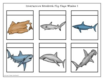 Whales All About Whales Interactive Research Activities
