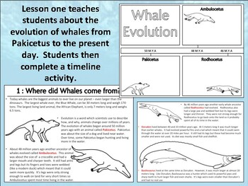 Whales : Complete Mini Unit Resources