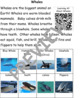 Whales: Informational Text and Writing Activity