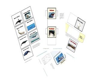 Whales Lap book