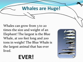 Whales - Marine Life Vol. 7 - Slideshow Powerpoint Presentation