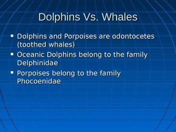 Whales Power Point