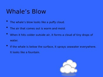 Whales Powerpoint