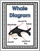 Whales Science and Literacy  - Whales Unit