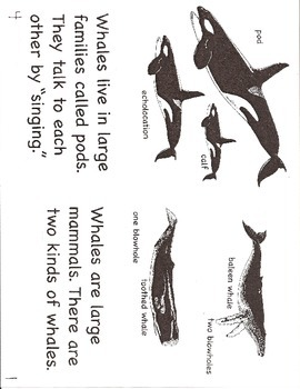 Whales- a non-fiction guided reading book