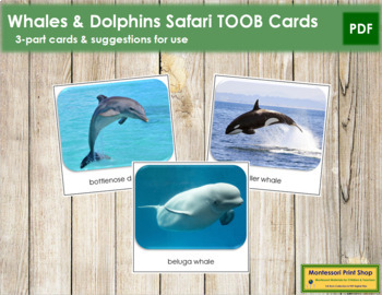 Whales and Dolphins Safari Toob Cards - Montessori