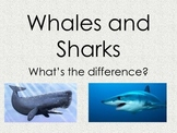 Whales and Sharks? What's the Difference?