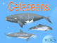 Whales, dolphins, habitats and threats