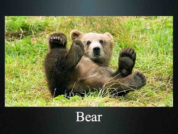 What Am I? Zoo Animal Mystery Game - Literacy - Keynote - ESL SPED K 1st