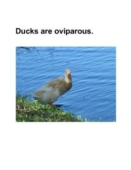 What Animals Are Oviparous?