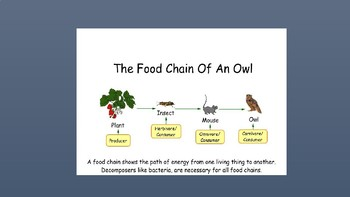 What Are Food Chains?