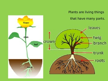 Plants for Early Primary Learners (Science)