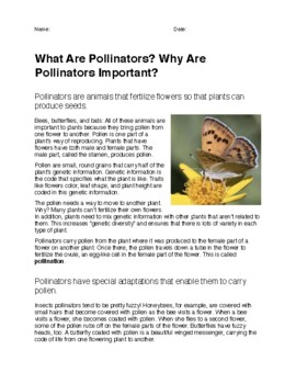 What Are Pollinators? Why Are Pollinators Important?