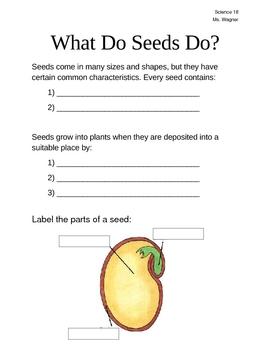 What Do Seeds Do?