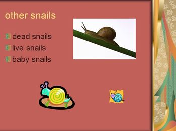 What Do Snails Eat? Powerpoint