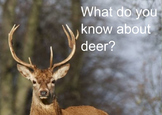 What Do You Know About Deer