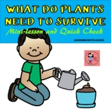 What Does a Plant Need to Survive