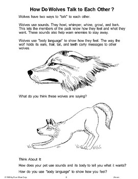 What Does a Wolf Look Like?