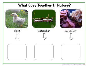 What Goes Together in Nature? Association Cards