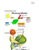What Happens in Photosynthesis?