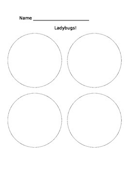 What I Learned About Ladybugs!
