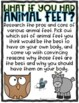What If You Had Animal Feet Opinion Writing Project