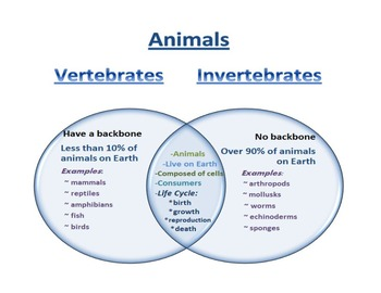 What In the World is an Invertebrate?