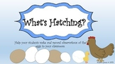 What Is Hatching?  (An Egg Hatching Journal)