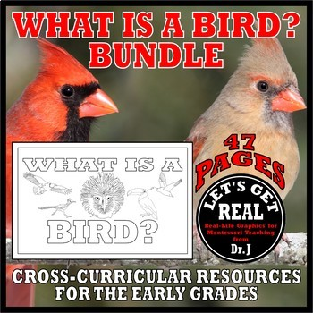 What Is a Bird? BUNDLE