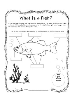What Is a Fish?