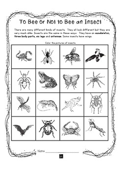 What Is an Insect?