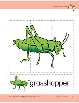 What Is an Insect?: Center Activity
