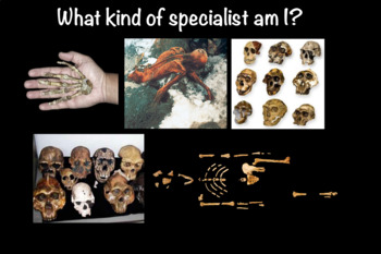 What Kind of Archaeological Specialist Am I?