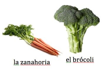 What Part of the Plant Do We Eat? Sort in Spanish
